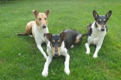 Adina, Bezinka a Koko