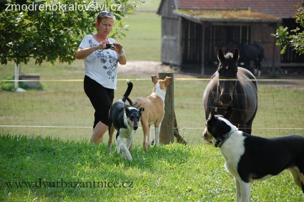 psi+koně