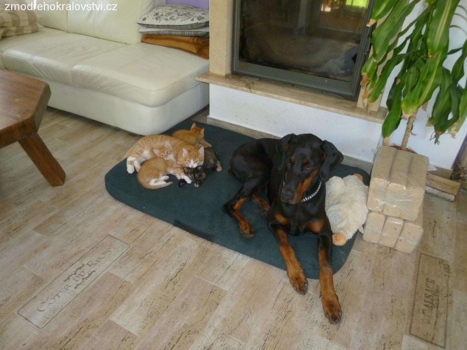 Ziz+koťátka